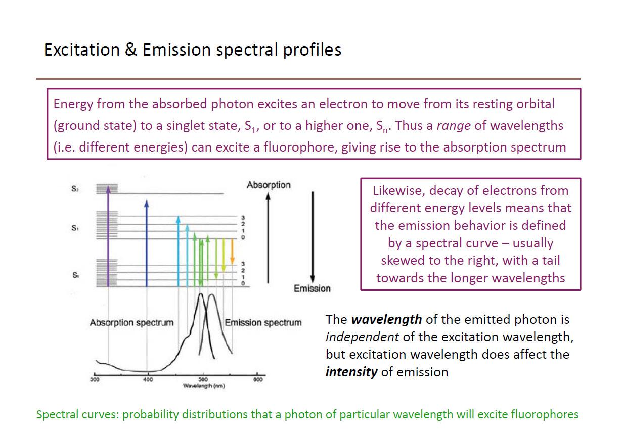 Fluorophore spectra