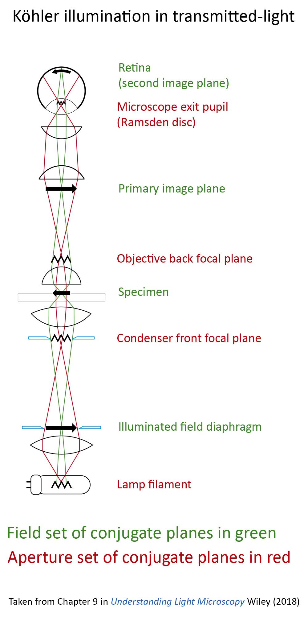 Kohler ray path