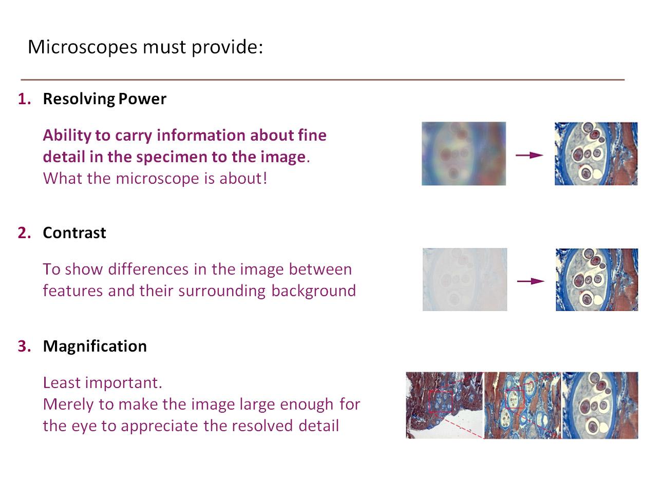Microscopes provide Webpage